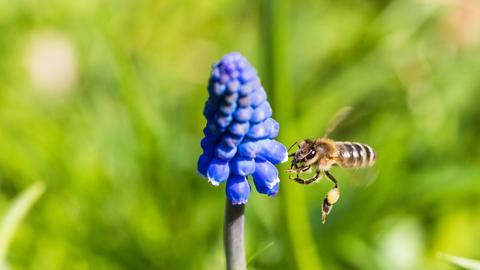Insektizidverbot zur Bienenrettung?