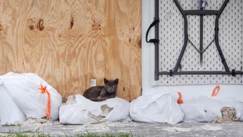 Katze liegt in Florida auf Sandsäcken