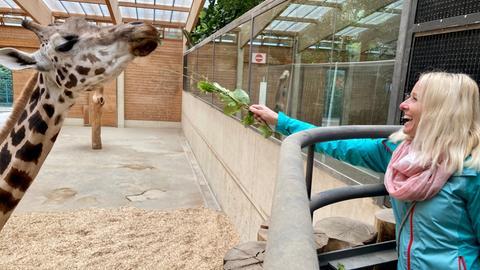 hr1-Moderatorin Simone Reuthal hat Spaß beim Giraffenfüttern.