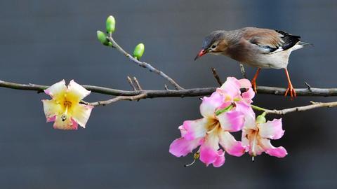 Zuversicht, Vogel, Blüten, Blumen